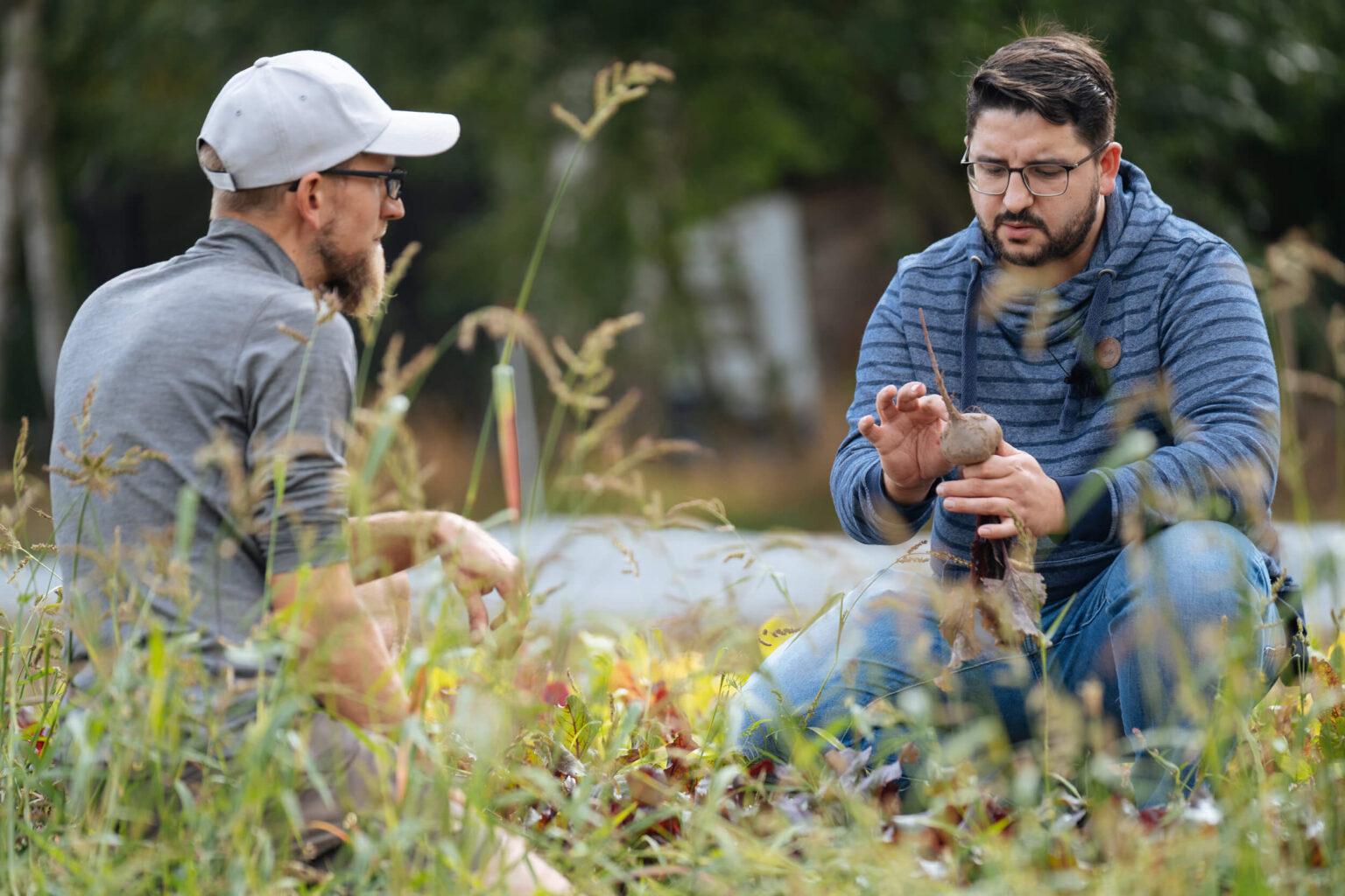 Chefkoch Silio Del Fabro auf dem Stadtbauernhof. Es zeigt Chefkoch Silio Del Fabro kniend auf einem Feld mit einer Ruebe in der Hand, die er begutachtet. Links neben ihm ist ein anderer Mann, der ihm zuschaut. Die Datei ist ein Foto im JPEG-Format.